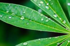 Kleine Tropfen des Taus auf frischem grünem Gras morgens lizenzfreie stockfotos