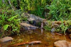 Kleine tropische rivier of stroom Stock Foto
