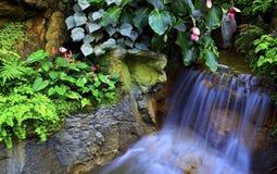 Kleine tropische waterval Royalty-vrije Stock Foto's