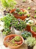 Kleine tuin Royalty-vrije Stock Fotografie