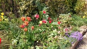 Kleine tuin Stock Foto