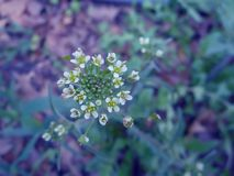 Kleine tuinbloemen Royalty-vrije Stock Fotografie