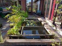 Kleine tuinvijver Stock Foto