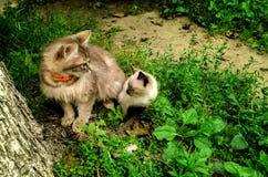 Kleine und große Katze lizenzfreie stockfotografie