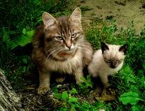 Kleine und große Katze lizenzfreie stockfotos