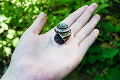 Kleine und lustige Waldschnecke auf der menschlichen Palme lizenzfreie stockfotos