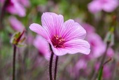 Kleine und zerbrechliche Blume lizenzfreie stockbilder