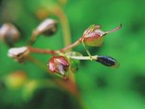Kleine Unkrautblumen stockfoto