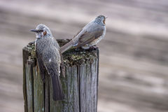 Kleine Vögel Lizenzfreies Stockfoto
