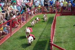 Kleine varkens die bij een markt van de staat rennen Stock Foto