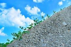 Kleine vegetatie 1 stock afbeeldingen