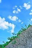 Kleine Vegetation 2 Lizenzfreie Stockfotografie