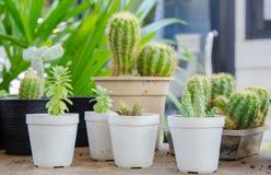Kleine verschiedene Arten von Kaktuspflanzen Stockfotografie