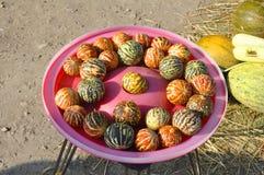 Kleine Vietnamese meloenen Stock Afbeeldingen