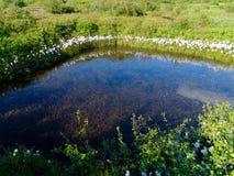 Kleine vijver dichtbij Thingvallavatn-Meer in IJsland Stock Foto