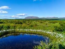 Kleine vijver dichtbij Thingvallavatn-Meer in IJsland - 2 Royalty-vrije Stock Afbeelding