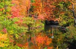 Kleine vijver in New England Stock Fotografie