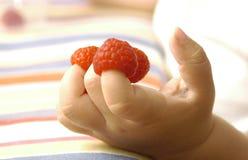 Kleine vingers met frambozen op hen Stock Afbeelding