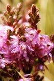 Kleine violette bloemen royalty-vrije stock foto