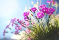 Kleine violette bloesems Royalty-vrije Stock Foto