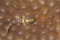 Kleine vissen Royalty-vrije Stock Foto