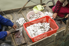 Kleine vissen in boot Royalty-vrije Stock Fotografie