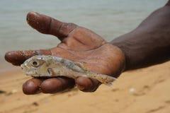 Kleine vissen in de hand van een Afrikaanse mens stock fotografie