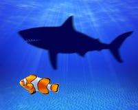 Kleine vissen die grote haai denken te zijn Royalty-vrije Stock Afbeelding