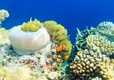 Kleine vissen in een oceaan, de Maldiven Royalty-vrije Stock Foto
