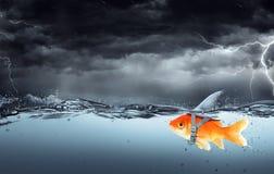 Kleine Vissen met Ambities van een Grote Haai die in Storm zwemmen stock foto