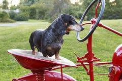 Kleine vlektekkel die op een rode tractor berijden royalty-vrije stock foto's