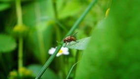 Kleine vlieg die zich op het blad bevinden stock afbeeldingen