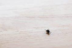 Kleine vlieg op houten lijst bij recht onderaan hoek Stock Afbeelding