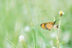 Kleine vlinder Stock Afbeelding