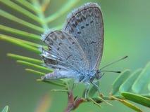 Kleine vlinder Stock Afbeeldingen
