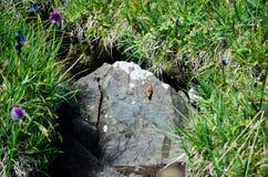 Kleine vlinder in de steen Royalty-vrije Stock Foto