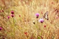 Kleine vlinderzitting op bloem Stock Foto's