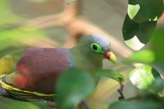 Kleine Vogel royalty-vrije stock foto