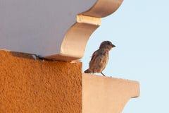 Kleine vogel Royalty-vrije Stock Foto's