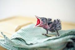 Kleine vogel Royalty-vrije Stock Fotografie