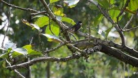 Kleine vogel stock video