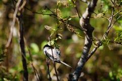 Kleine vogel in boom Stock Afbeeldingen