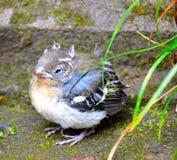 Kleine vogel stock afbeelding