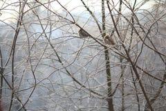 Kleine vogel in de koude winter tegen balckground Stock Foto