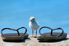 Kleine vogel GROTE schoenen stock afbeelding