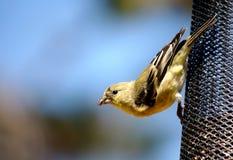 Kleine Vogel op een voeder royalty-vrije stock afbeelding