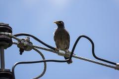 Kleine vogel op elektriciteitslijn Royalty-vrije Stock Foto's