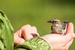 Kleine vogel op hand Royalty-vrije Stock Afbeeldingen