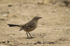 Kleine vogel over het zand royalty-vrije stock foto's