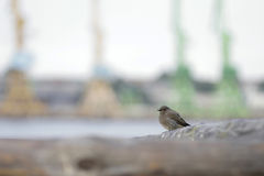 Kleine Vogelnahaufnahme Lizenzfreie Stockfotografie